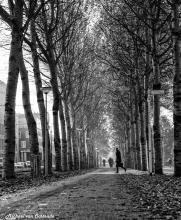 Amksterdam-forest