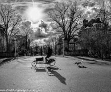 Vondelpark bicycle dog