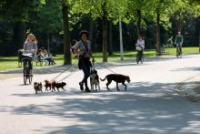 Street Photography Amsterdam Dog walking service Vondelpark