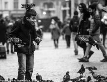 Street Photography Amsterdam pigeon fun